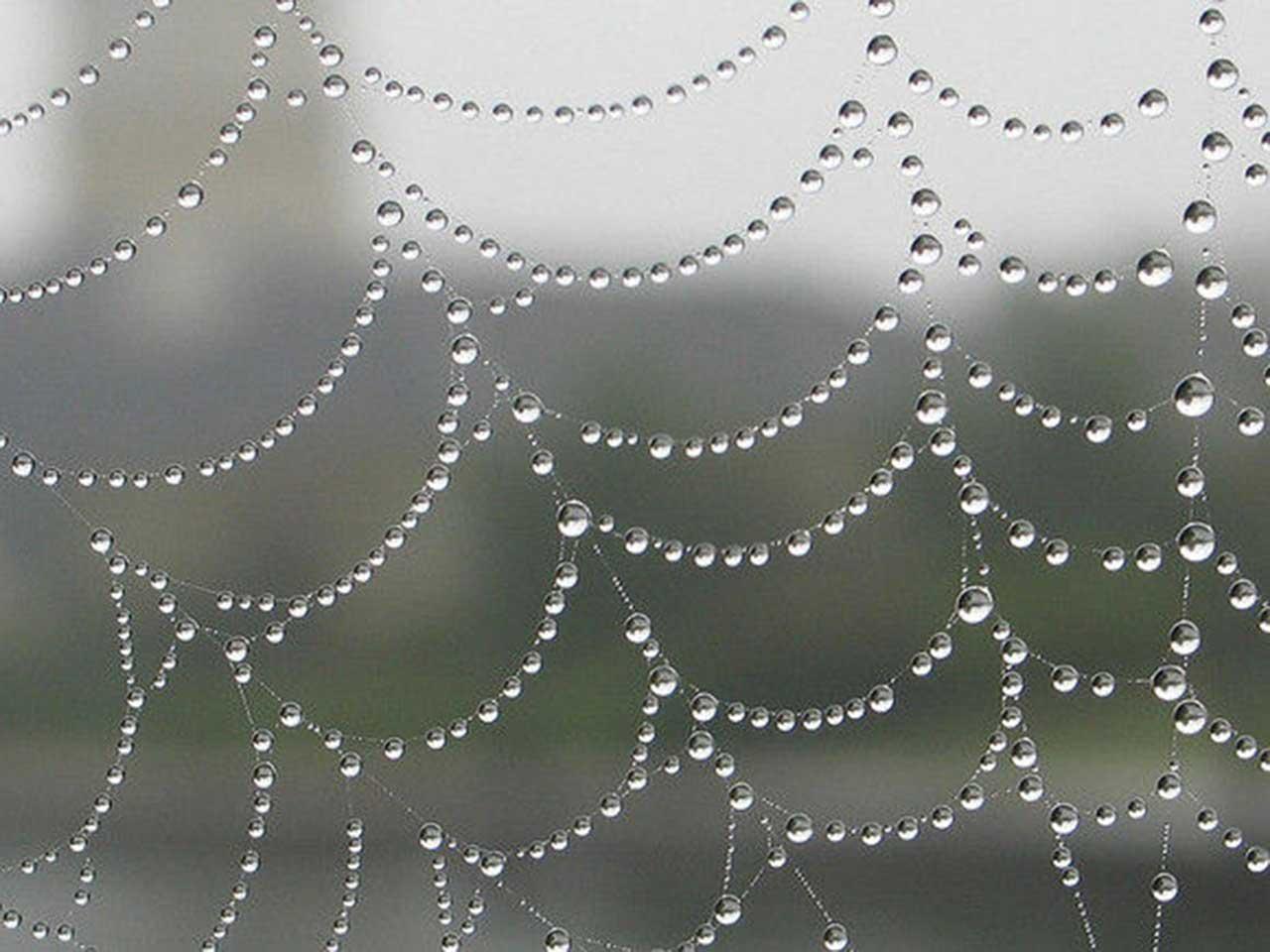 dew drops web wallpaper for ipad