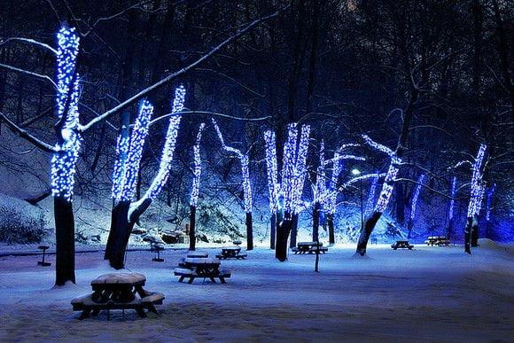 glowing tree wallpaper for ipad